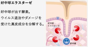 https://www.pola.co.jp/brand/wrinkle/science/